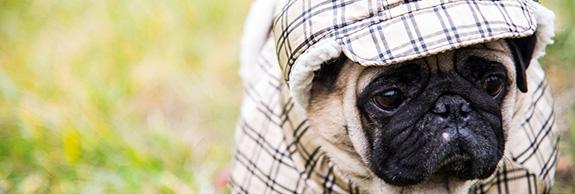 Które psy trzeba ubierać i dlaczego?